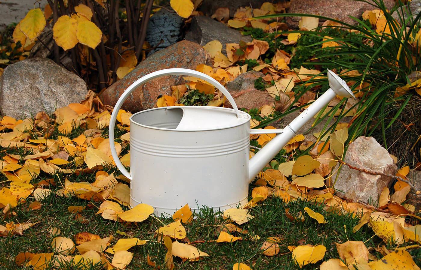 Gardening hints and tips as we approach autumn