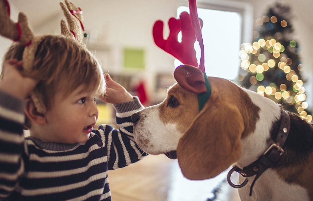 Top 5 Christmas gifts for your pet!